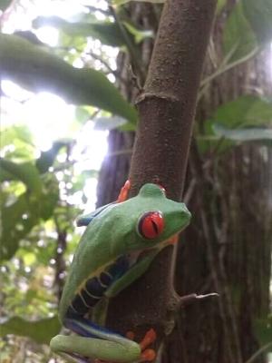 Fauna del Lugar.