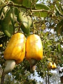 Frutas del lugar